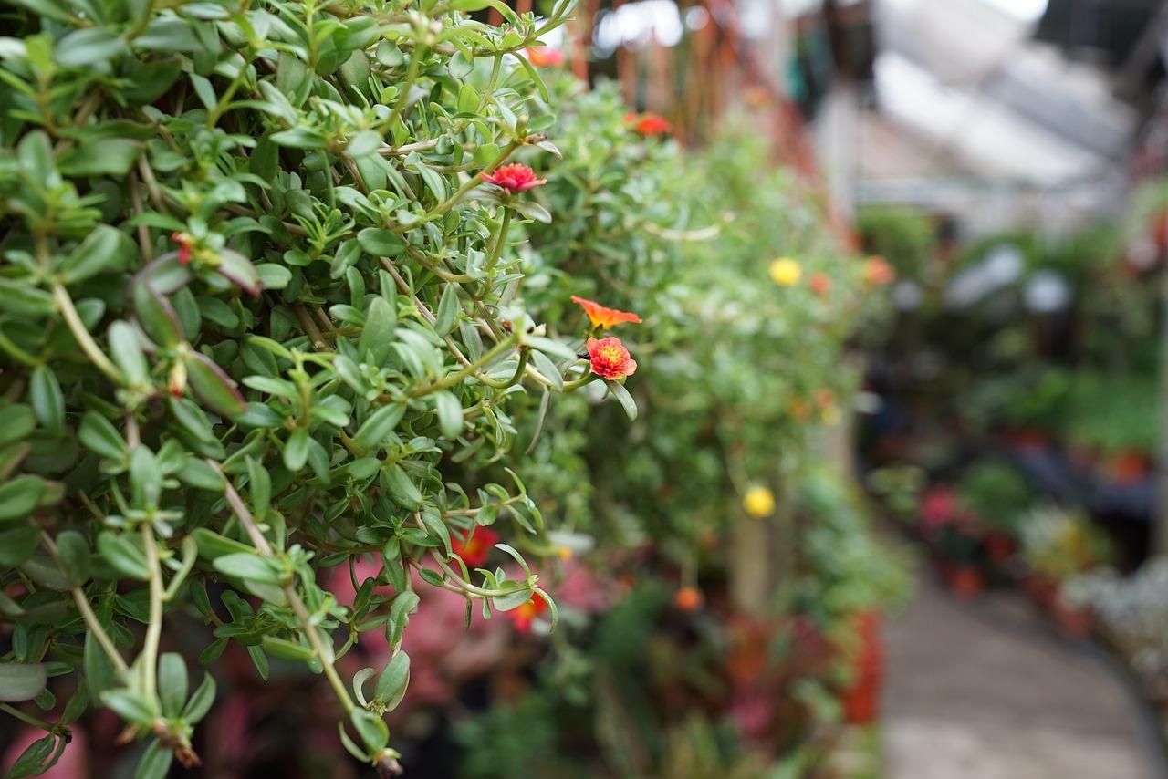 Immagini Piante E Fiori piante e fiori, via libera alla vendita nei supermercati